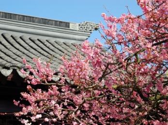 plum-blossom-roofline-graybox__page-header-gallery